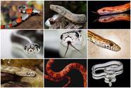 Snake collage Stock Illustration