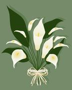 Calla lily Stock Illustration