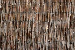 Reed Wall 3 - stock photo
