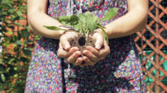 Plant in hands. Stock Footage