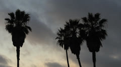 Time-Lapse-Palm-Trees-Clounds-California-Sunset Stock Footage