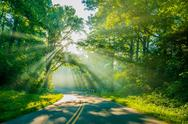 Stock Photo of sun rays through trees on road