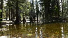 Mammoth Lakes LM25 Circular Dolly R Reflections Forest Sierra Nevada Mts Cali - stock footage