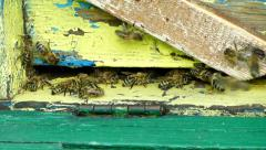 Bees flying into the hive with bee pollen. Stock Footage