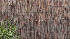 Reed Wall with a Clump of Leaves 1 Stock Footage