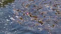 Rose Floating In Ocean Stock Footage