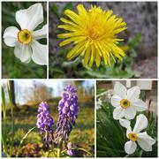 group of beautifull flowers at spring season - stock photo