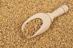 fenugreek seed in a wooden spoon over white background, seasoning. - stock photo