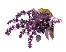 color fresh purple basil /ocimum basilicum/ isolated on white background - stock photo