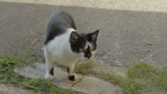 Black and white cat lurking for mouse outdoor Stock Footage