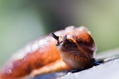 slug in garden - stock photo