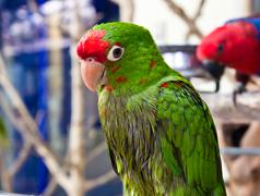 Green parrot bird Stock Photos