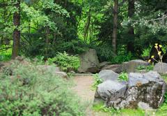 japan garden - stock photo