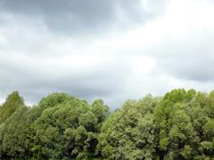 green wood  and lowering clouds - stock photo
