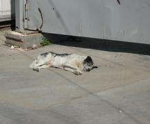 stray dogs on street - stock photo