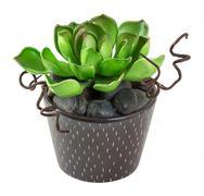 Flaming katy in ceramic pot - artificial plant Stock Photos