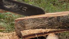 Chainsaw at Forest Stock Footage