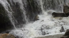 Waterfall - stock footage