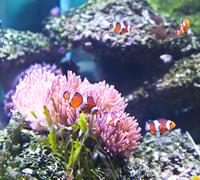 Coral reef and tropical fish in an aquarium. Stock Photos