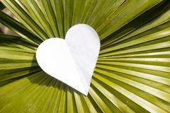 Heart on big leaf Stock Photos