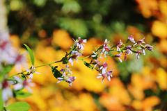 Purple aster fall background Stock Photos