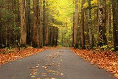 Single lane road autumn - stock photo
