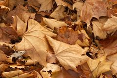 Leaves Stock Photos