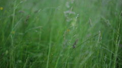 Grassfield Stock Footage