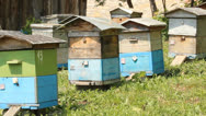 Stock Video Footage of The apiary. Beehives