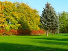 Morning autumn landscape of a green field with differnt trees Stock Photos