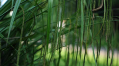 Moving Grassplant and a Walker with a Dog Stock Footage