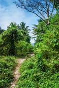 Stock Photo of tropical landscape in phuket thailand