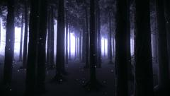 Trees at night Stock Footage