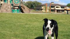 Dog playing at the park Stock Footage