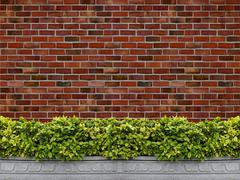 Tree in pot with brick wall background Stock Photos