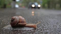 snail crossing road - stock photo