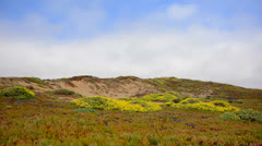 Time Lapse of Sand Dune at Point Reyes National Park Stock Footage