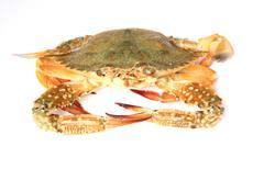 Crab isolated on white background Stock Photos