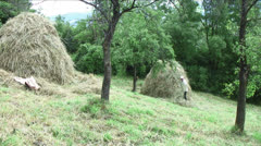 Making haystacks Stock Footage