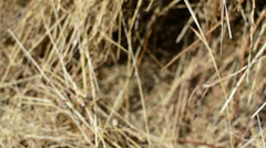 Hay stack track right Stock Footage