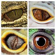 Reptiles eyes Stock Photos