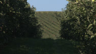 Stock Video Footage of Apple orchard zoom out