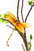 close up handmade dragonfly - stock photo