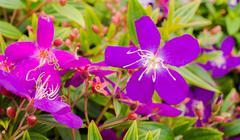 pretty flowers - stock photo