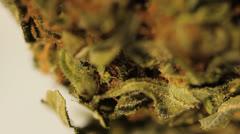 Medical marijuana grass medical cannabis THC Stock Footage