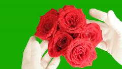 Roses on a green background Stock Footage