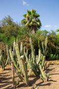 large group of green cactus - stock photo