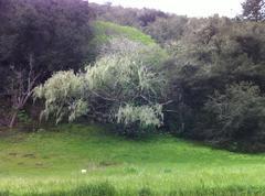 Mossy Trees Stock Photos