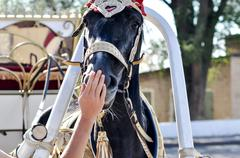 2014 year of the horse, the horse of wedding Stock Photos
