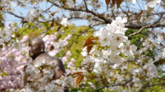 Tokyo Japan Cheery Blossom And Statue - stock footage